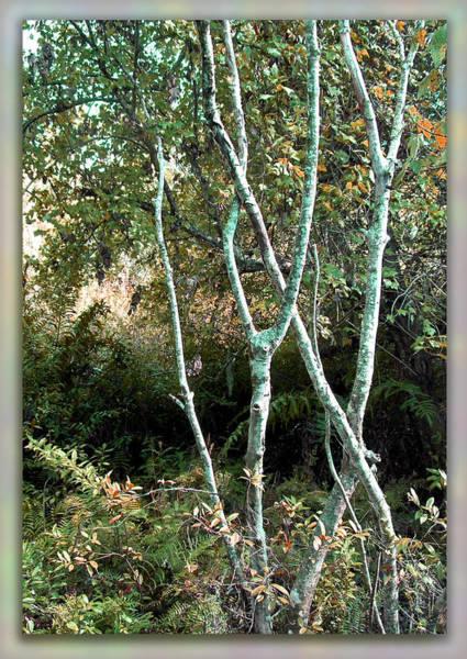 Sawgrass Digital Art - Enchanted Forest by Ginny Schmidt