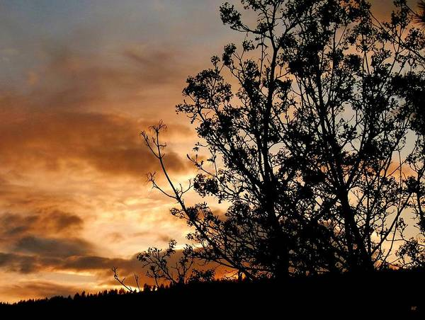 Wall Art - Photograph - End Of Day Silhouettes by Will Borden