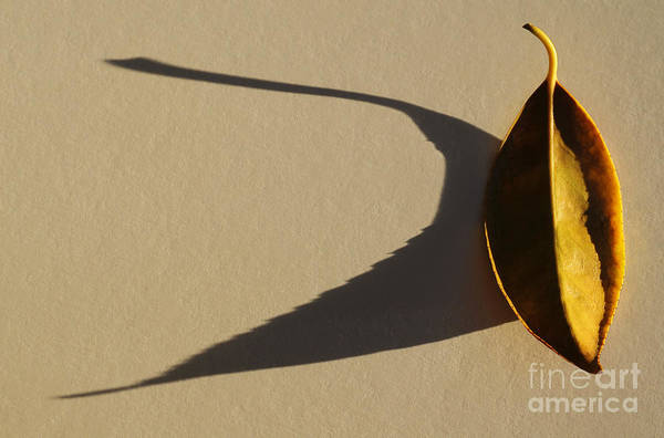 Wall Art - Photograph - End Of The Day by Dan Holm