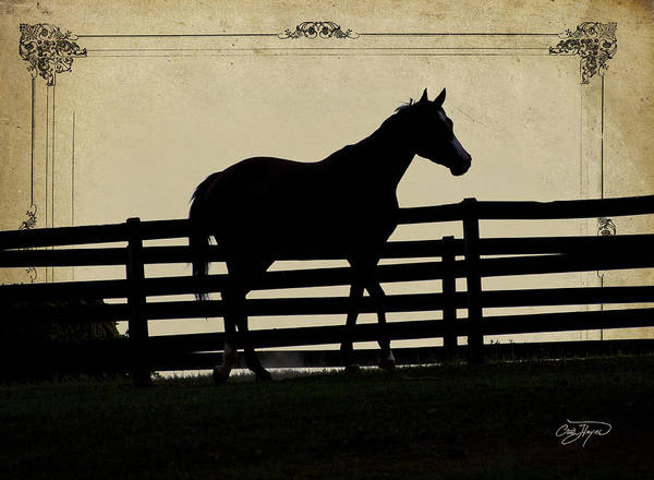 Little Things Photograph - End Of The Day In Georgia - Horse Lovers Must See - Artist Cris Hayes by Cris Hayes