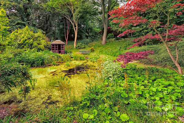Flower Beds Photograph - English Garden  by Adrian Evans