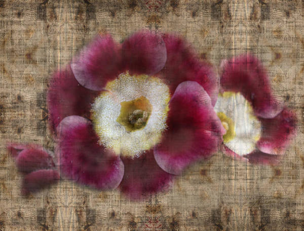 Wall Art - Photograph - English Primrose  by Barbara  White