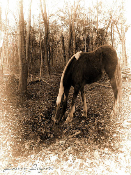 Wall Art - Photograph - Equine Solitude by Lourry Legarde