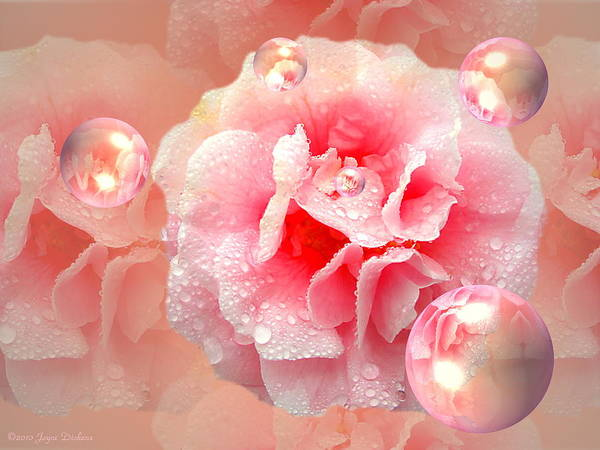 Camelia Photograph - Pink Camelia by Joyce Dickens
