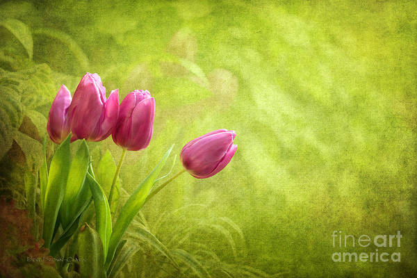 Photograph - Essence Of Spring by Beve Brown-Clark Photography