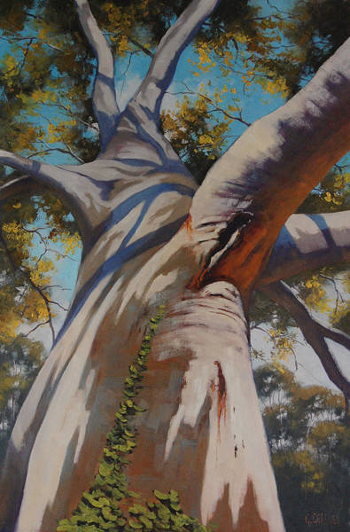 Old Tree Painting - Eucalyptus Portrait by Graham Gercken