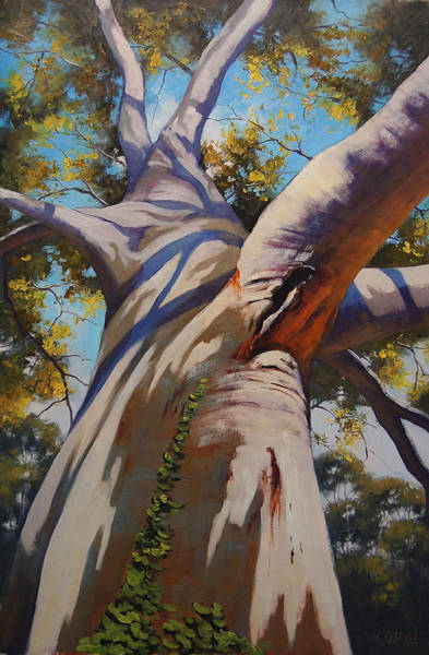 Old Tree Painting - Eucalyptus Tree Portrait by Graham Gercken