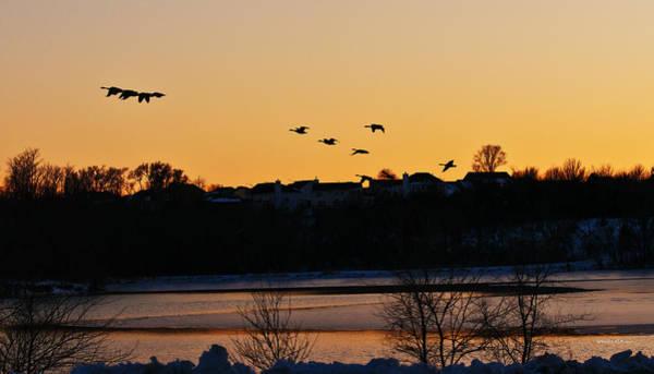 Photograph - Evening Flight by Edward Peterson