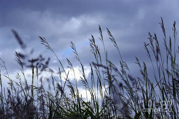 Grey Skies Wall Art - Photograph - Evening Grass by Elena Elisseeva