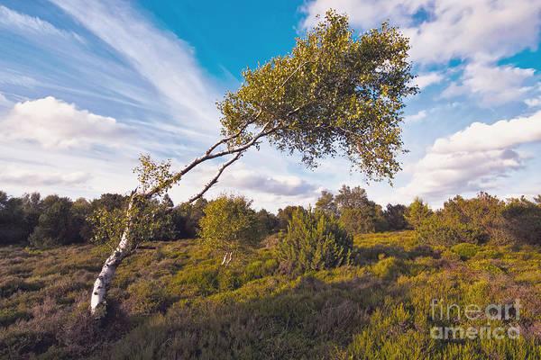 Wall Art - Photograph - Evening Mood On The Heath by Wedigo Ferchland