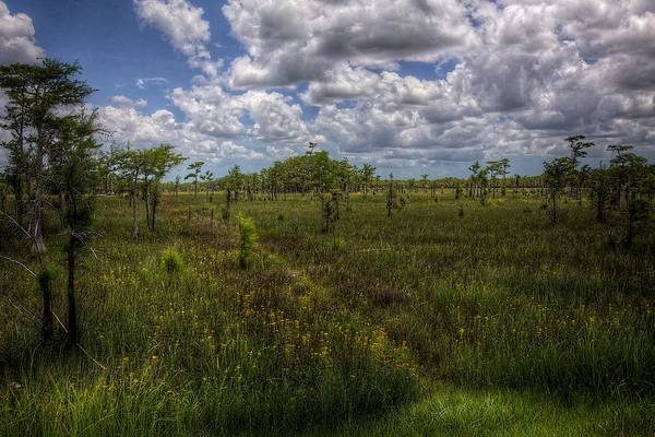 Wall Art - Photograph - Everglades Meadow by William Wetmore
