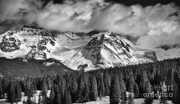 Photograph - Evergreens And Mountain Snow by David Waldrop