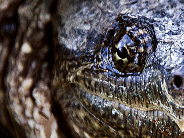 Snapping Wall Art - Photograph - Eye On You by George Hausler
