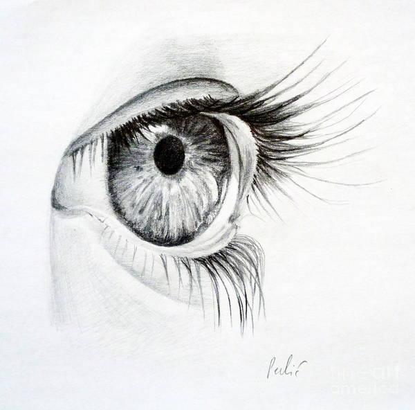 Drawing - Eye Study by Eleonora Perlic