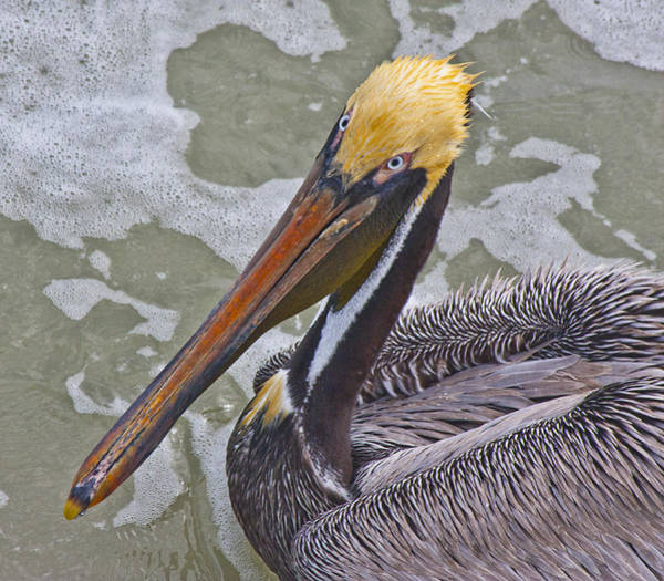 Pelican Wall Art - Photograph - Eye To Eye by Betsy Knapp