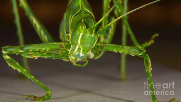 Photograph - Face Of A Grasshopper by Mareko Marciniak