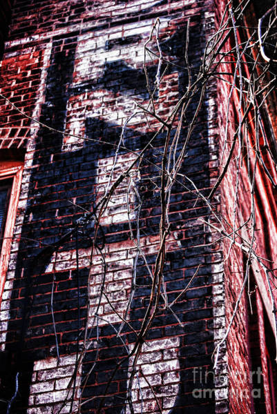 Ad Photograph - Faded Paint And Vines by HD Connelly