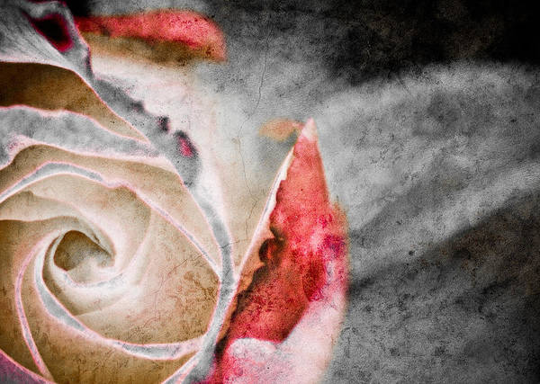 Photograph - Faded Rose by Trish Tritz