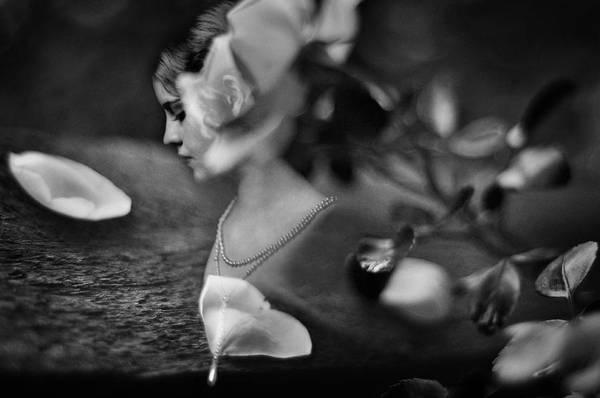 Photograph - Fading Beauty by Rebecca Sherman
