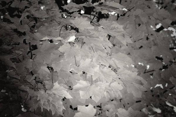 Wall Art - Photograph - Fading Fall by Mark  Ross