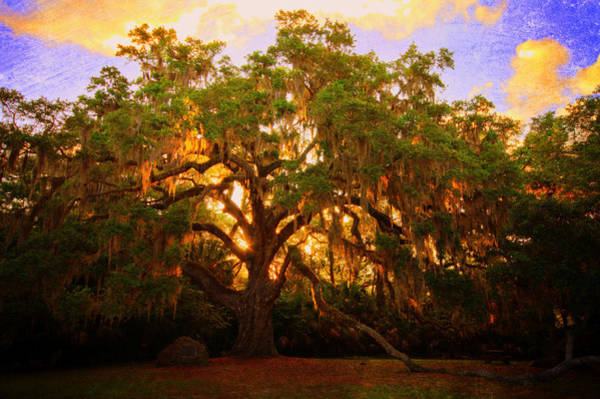Wall Art - Photograph - Fairchild Oak Sunrise by Andrew Armstrong  -  Mad Lab Images