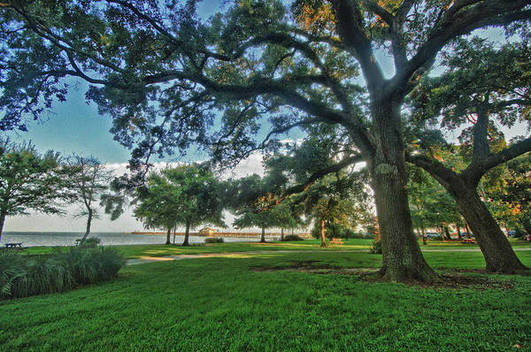 Digital Art - Fairhope Lower Park 4 by Michael Thomas
