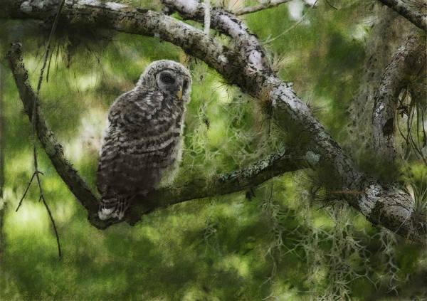 Cypress Digital Art - Fakahatchee Owl by Wade Aiken