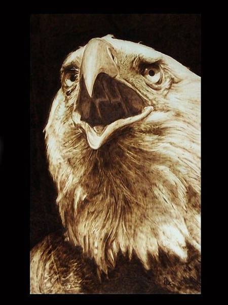 Pirografia Wall Art - Pyrography - Falconiformes by Davide Della Noce