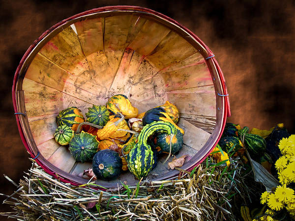 Photograph - Fall Autumn Bounty - Color Vignette Photo Of Squash And Multishaped Warty Gourds In A Wooden Bushel by Chantal PhotoPix