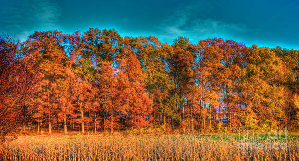 Photograph - Fall Beauty  by Mark Dodd