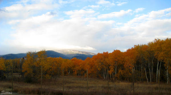 Photograph - Fall Color by C Sitton