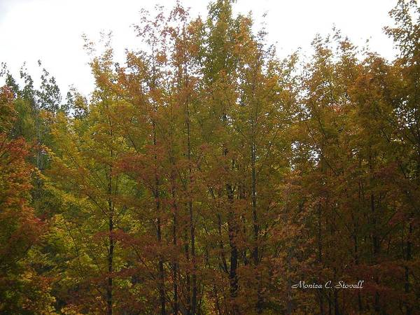 Photograph - Fall Colors Colection - Michigan by Monica C Stovall