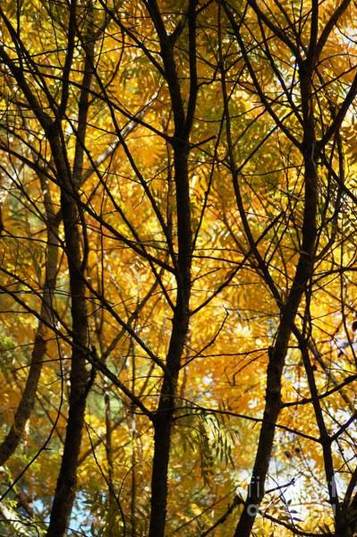 Photograph - Fall Colors by Donna Bentley
