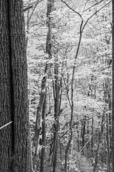 Blye Photograph - Fall Colors In Black And White by Kenneth Blye