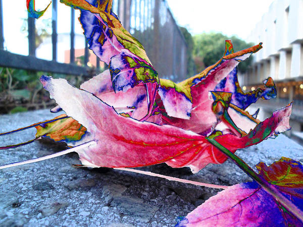 fall composition in spring  at CSULA Art Print