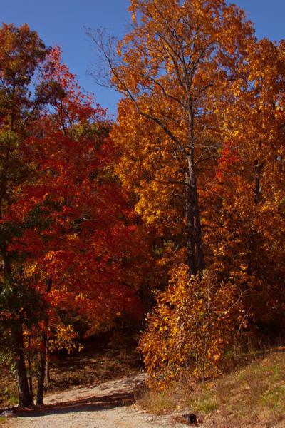 Wall Art - Photograph - Fall Foliage 5 by Robert Torkomian