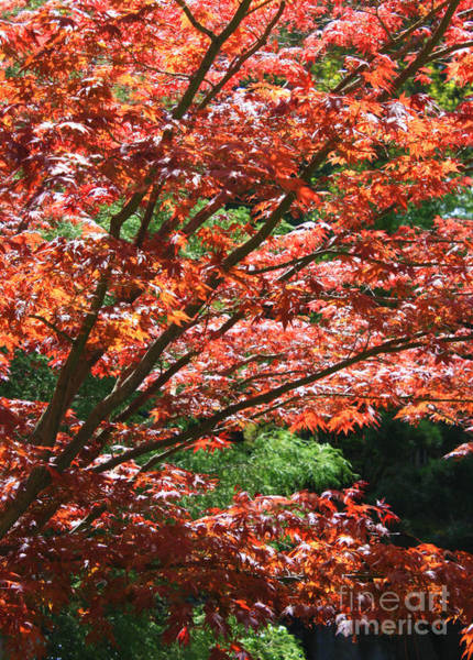 Photograph - Fall Foliage by Carol Groenen