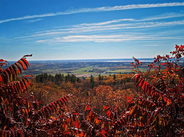 Photograph - Fall Foliage Viewed Through Red Leaved Sumac Trees by Chantal PhotoPix