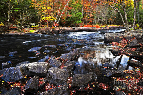 Algonquin Photograph - Fall Forest And River Landscape by Elena Elisseeva