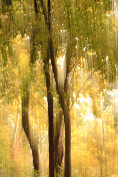 Photograph - Fall Glory by Keith Allen