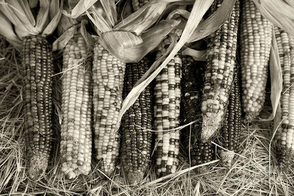 Photograph - Fall Harvest by M K Miller