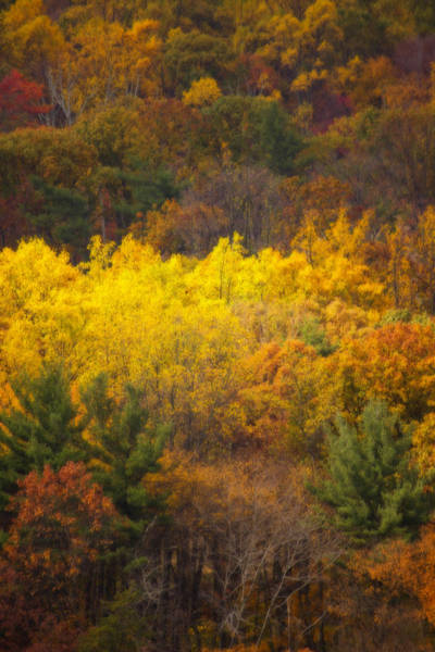 Photograph - Fall In Central Pennsylvania by Shelley Neff
