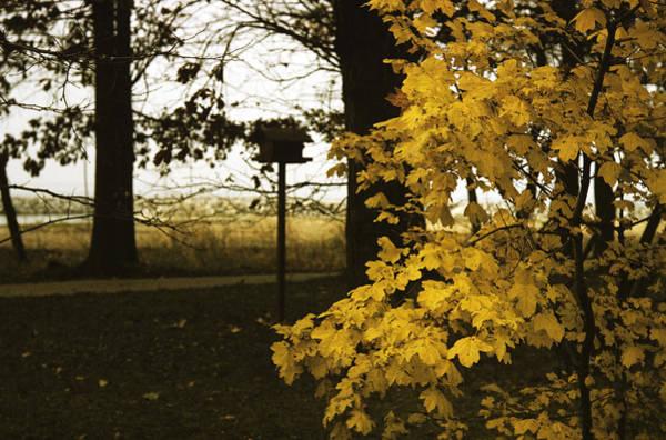Photograph - Fall In Lausanne by Dragan Kudjerski