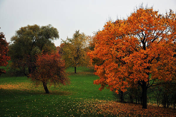 Photograph - Fall In Park by Dragan Kudjerski