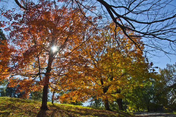 Photograph - Fall In Virginia by Mike Fitzgerald