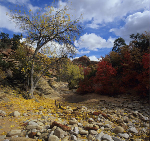 Fall In Zion High Country Art Print