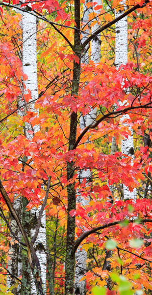 Photograph - Fall Layers II by Adam Pender