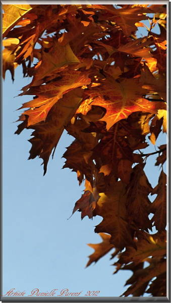 Photograph - Autumn Oak Leaves by Danielle  Parent