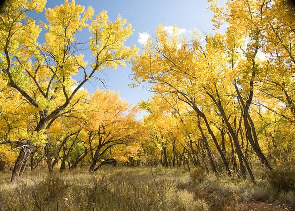 Photograph - Fall Leaves In New Mexico by Shane Kelly