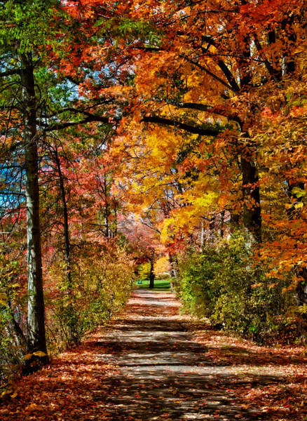 Wall Art - Photograph - Fall Pathway by Fred LeBlanc